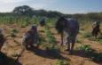 Las mujeres rurales son el pilar de las comunidades y del Mundo